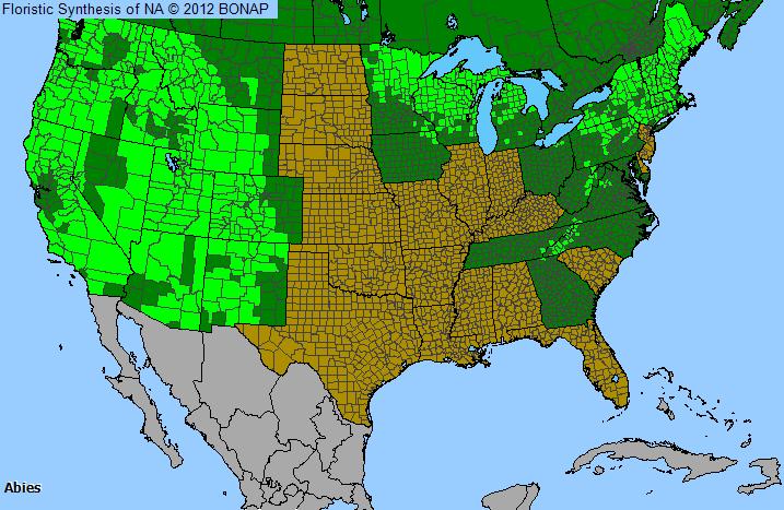 Fir Abies Genus Level Details And Allergy Info Pollencom - Us pollen map