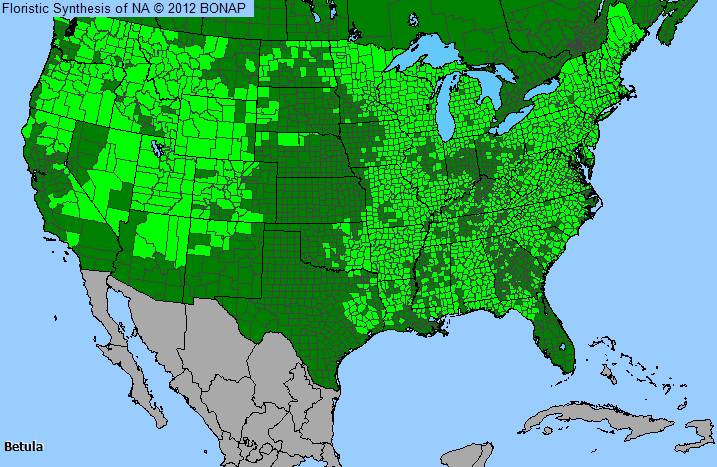 Birch Betula Genus Level Details And Allergy Info Pollencom - Us pollen map