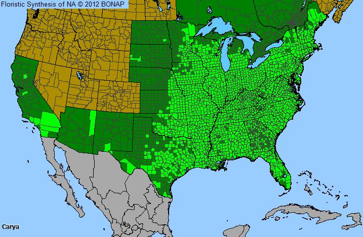 Hickory Carya Genus Level Details And Allergy Info Pollencom - Us pollen map