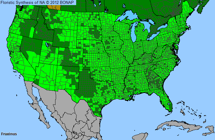 Ash Fraxinus Genus Level Details And Allergy Info Pollencom - Best place in us for allergies map