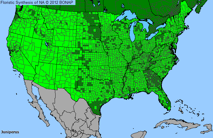 Allergy Map Florida.Juniper Juniperus Genus Level Details And Allergy Info Pollen Com